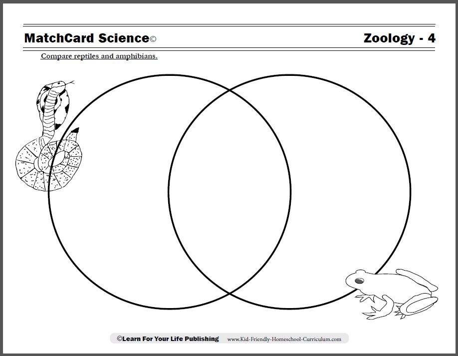 Reptiles vs Amphibians Worksheet
