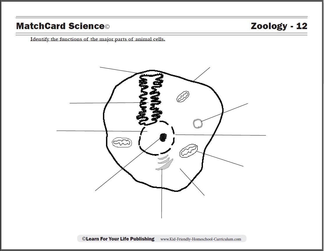 Animal Cell Worksheet