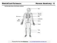 Anatomy MatchCard