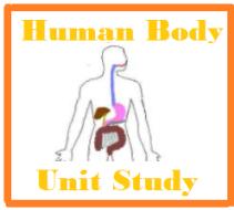 Human Anatomy Unit Study Cover