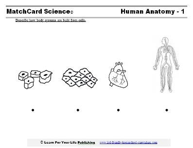 human anatomy worksheet