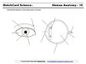 human eye worksheet