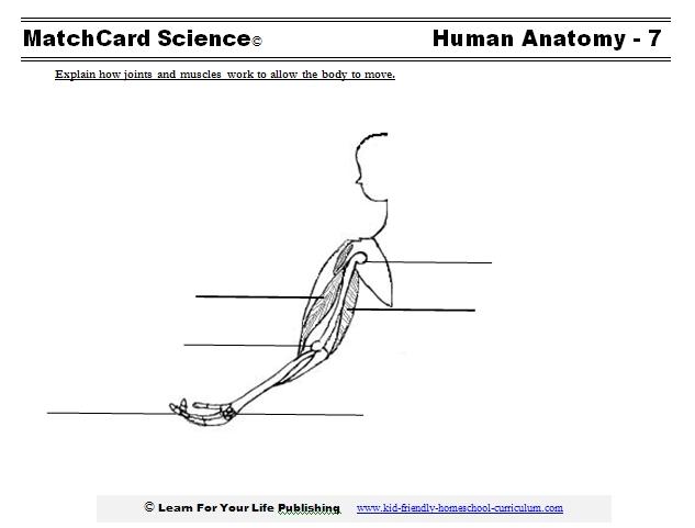 musculoskeletal worksheet