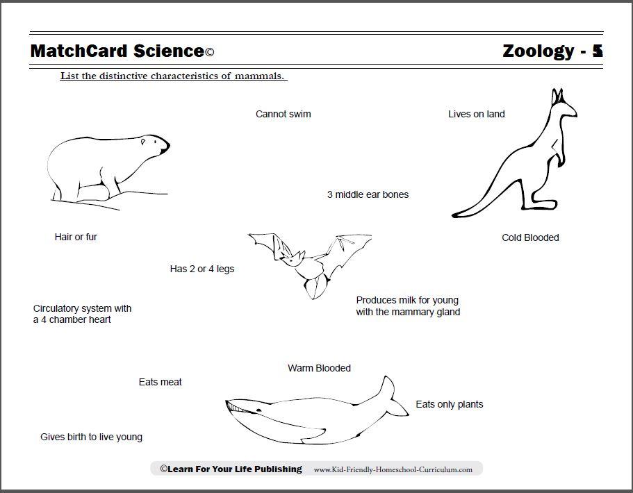 Mammals facts worksheet