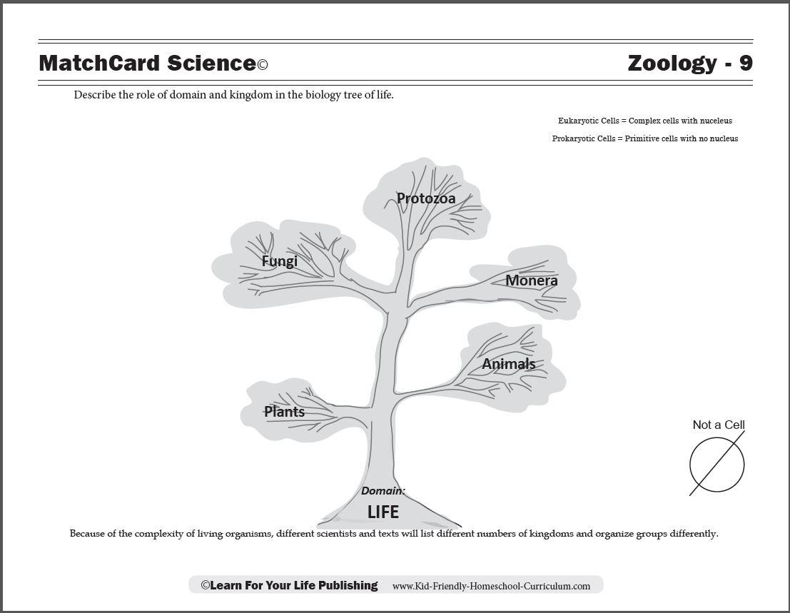 Tree of Life Worksheet