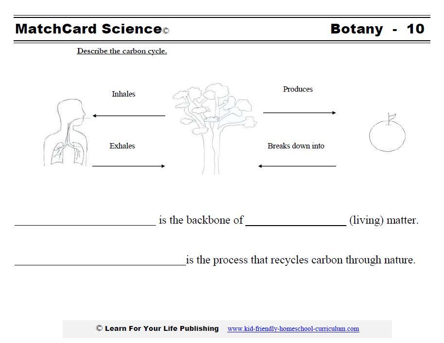 carbon cycle worksheet