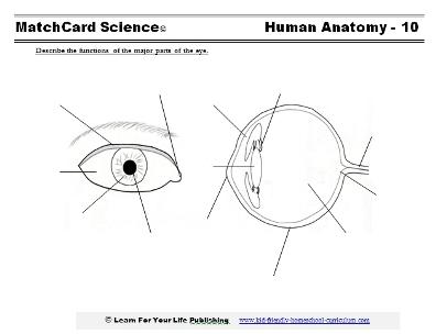 human eye diagram. Black Bedroom Furniture Sets. Home Design Ideas