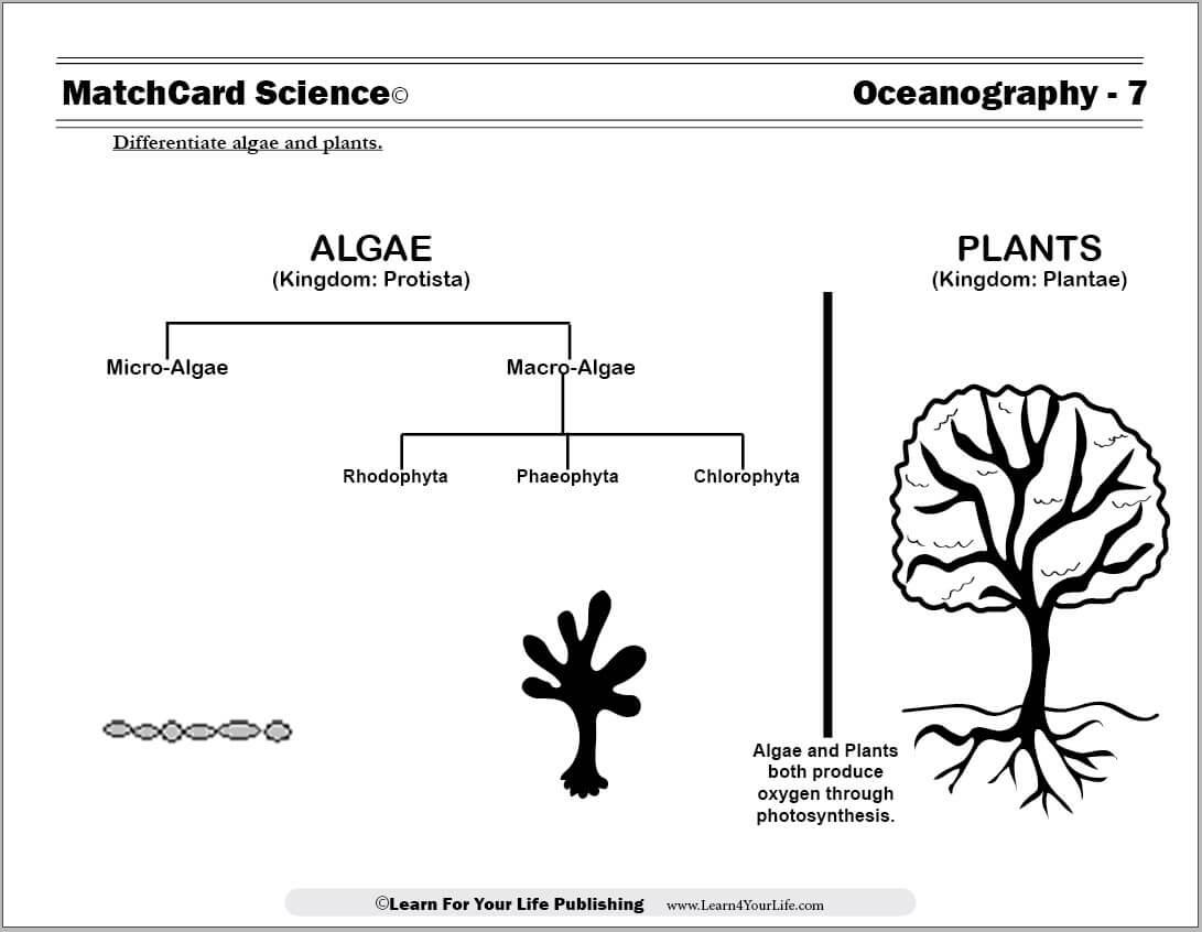Ocean Worksheet