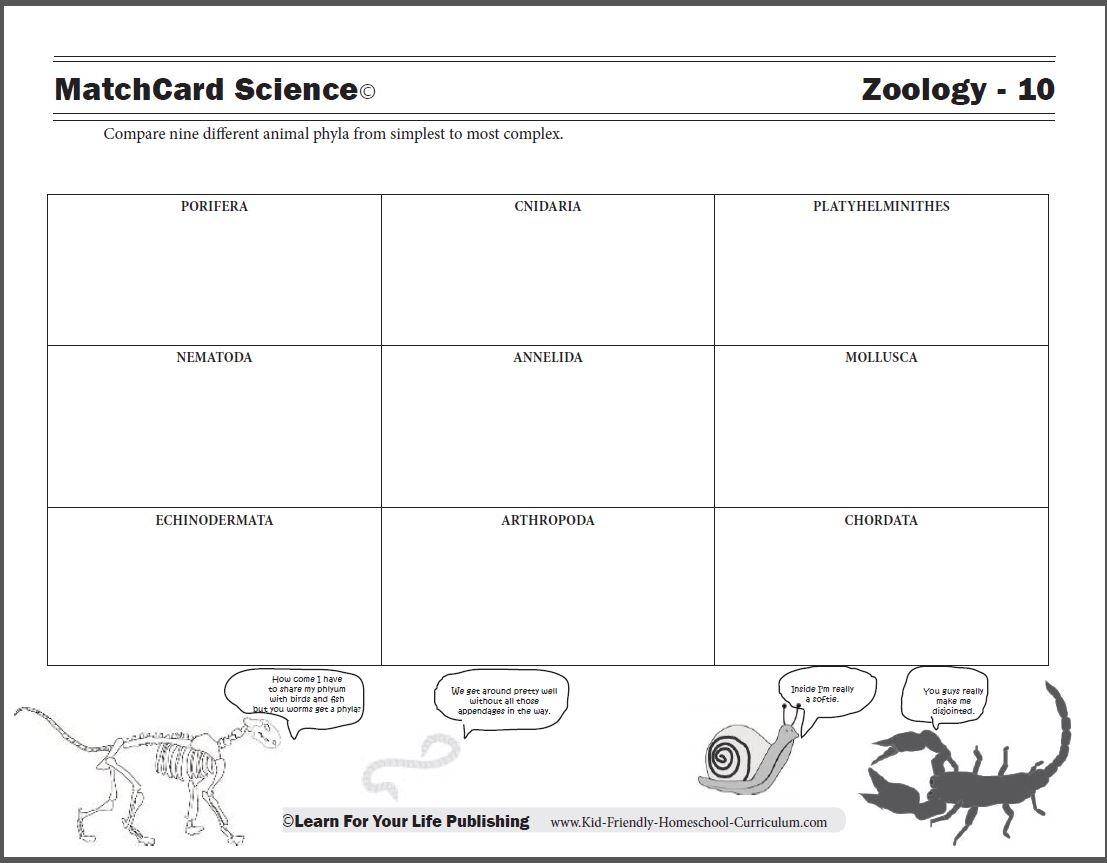 Animal Phyla Chart