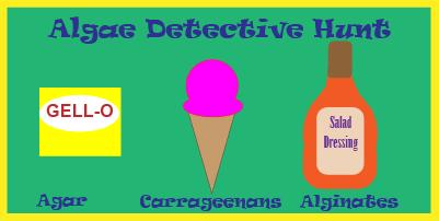 Algae Detective Hunt
