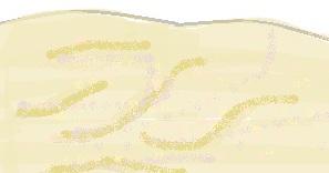 desert diagram
