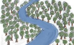 rainforest diagram