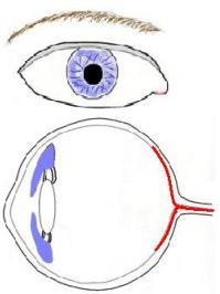 blue eye diagram