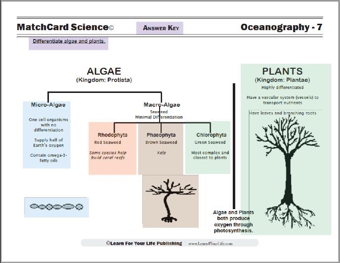 colored plant and algae worksheet