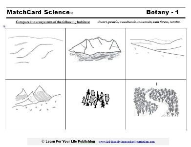 ecosystem worksheet