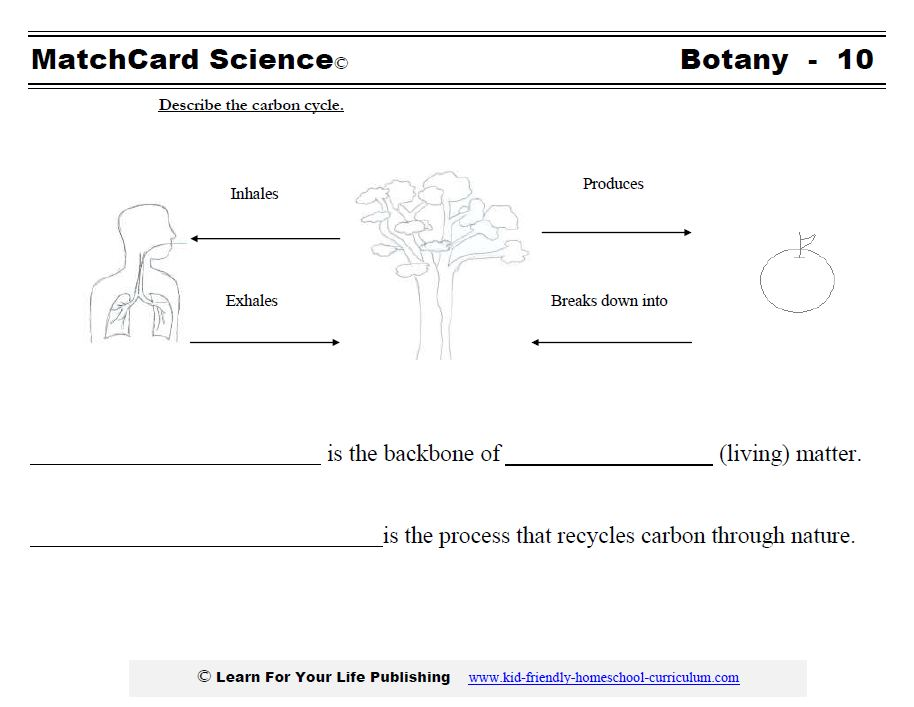 Botany Science Projects – Nutrient Cycle Worksheet