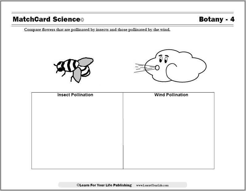 flower pollination worksheet