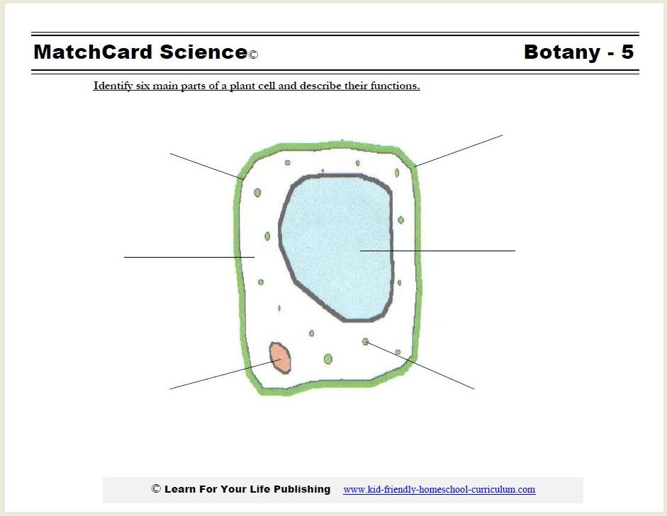 Plant Cell Diagram – Plant and Animal Cell Diagram Worksheet