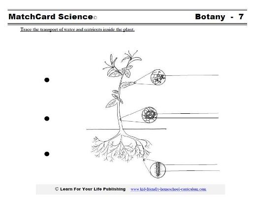 botany worksheet