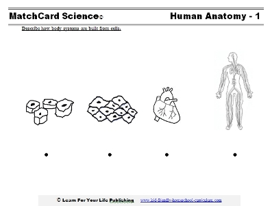 human anatomy worksheet