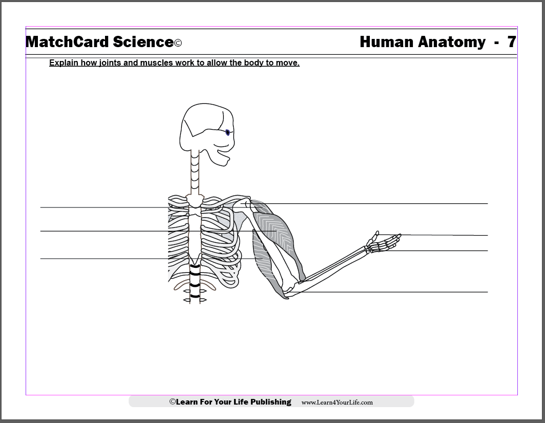 musculoskeletal worksheet