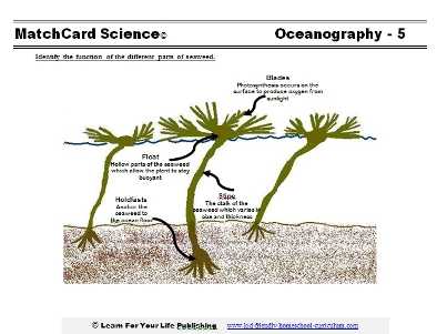 Seaweed Diagram