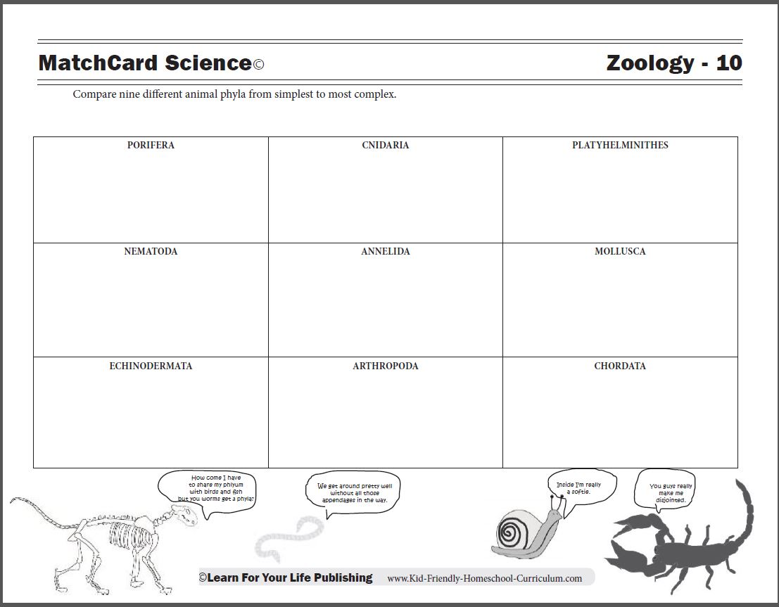 Animal Phylum Worksheet