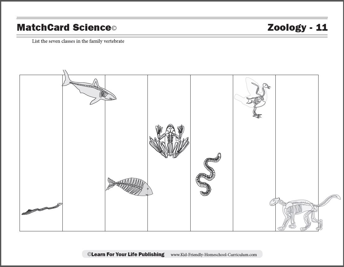 vertebrate worksheet