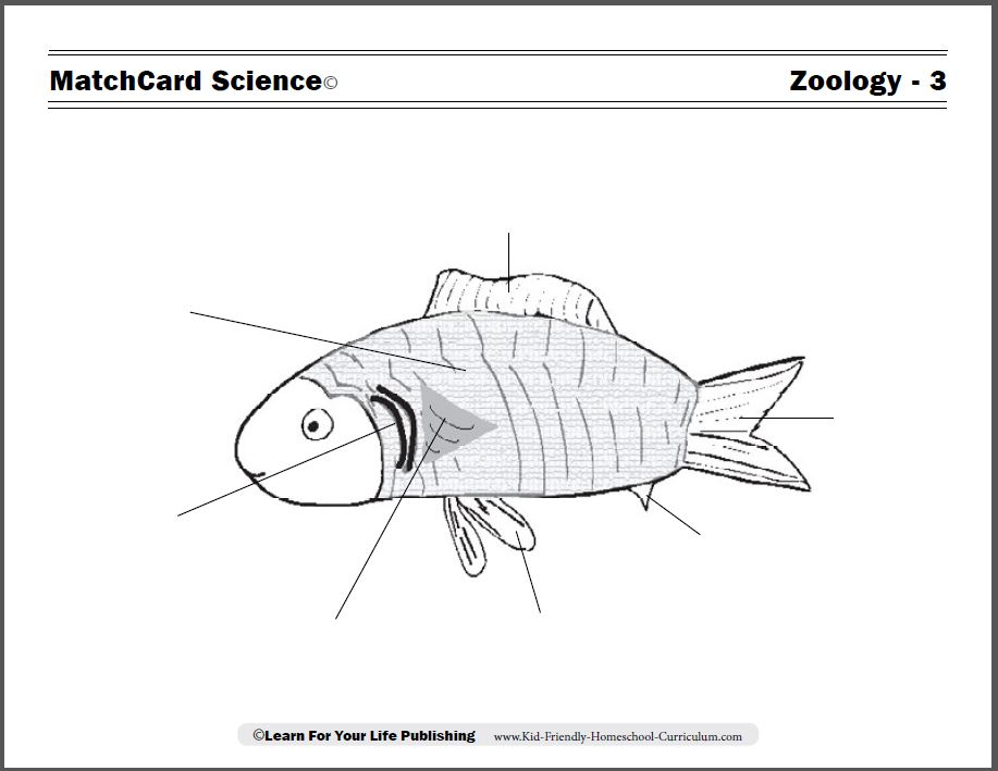 Fish Worksheet