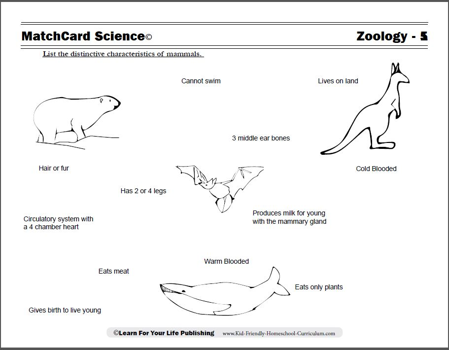 Mammals facts worksheet