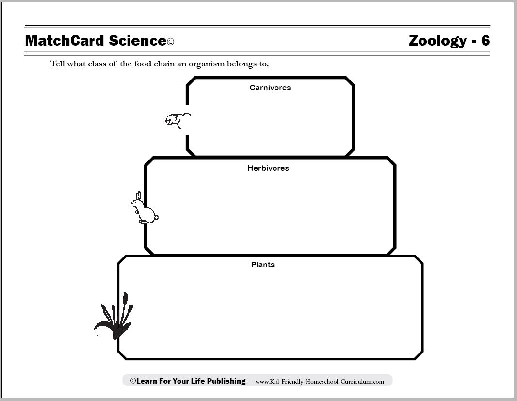 Printables Food Web Worksheets food chain worksheets