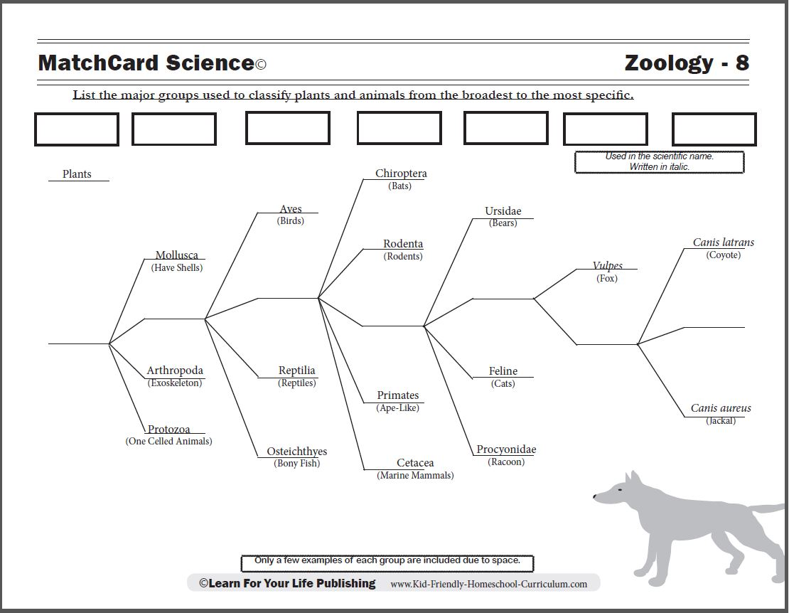 Biological Classification Worksheet: Scientific Classification Worksheet,