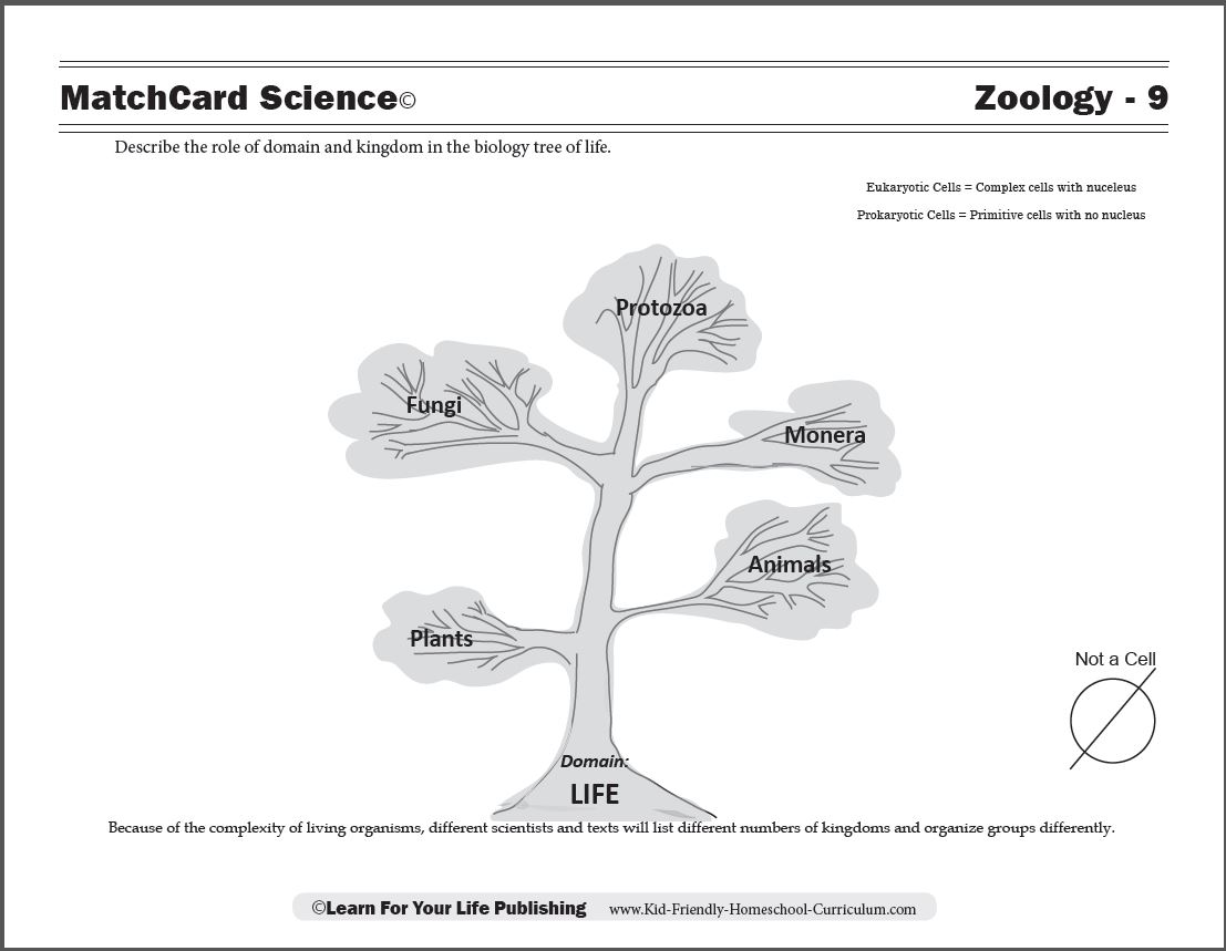 Biology Tree of Life – Kingdoms of Life Worksheet