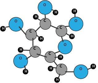 carbohydrate molecule diagram
