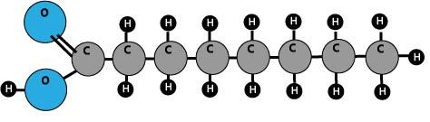 fatty acid molecule