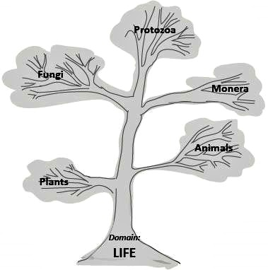 Tree of Life for Kids